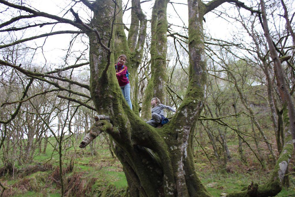 Genoeg bomen om in te klimmen op onze route.