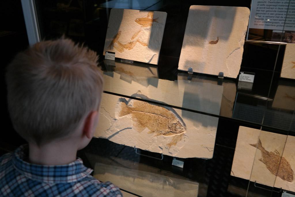 Fossielen van vissen bekijken.