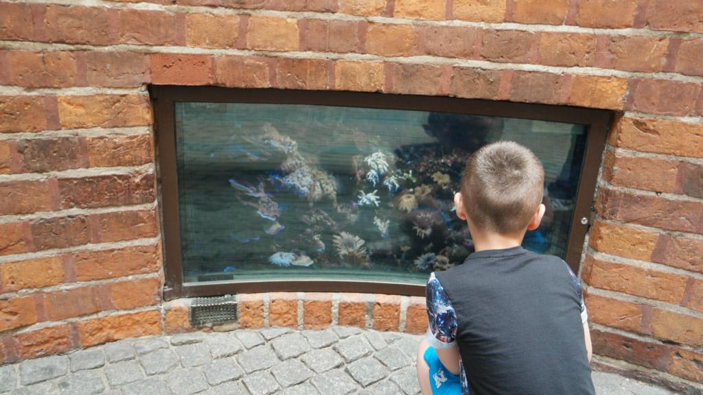Zomaar een aquarium in de gevel.