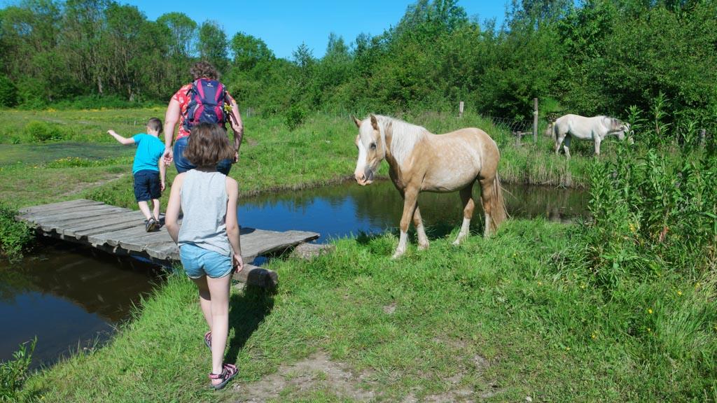 We moeten vlak langs de paarden lopen.