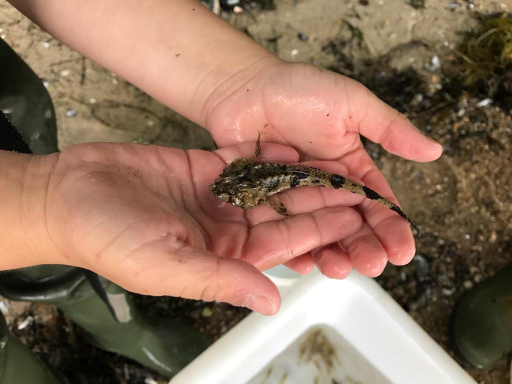Een schorpioenvisje.