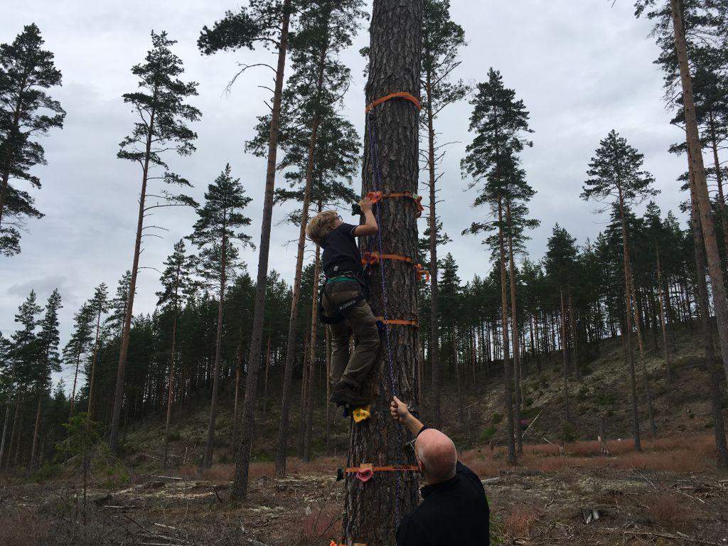Klimmen in bomen is een van de actieve bezigheden tijdens het kids survival parcours