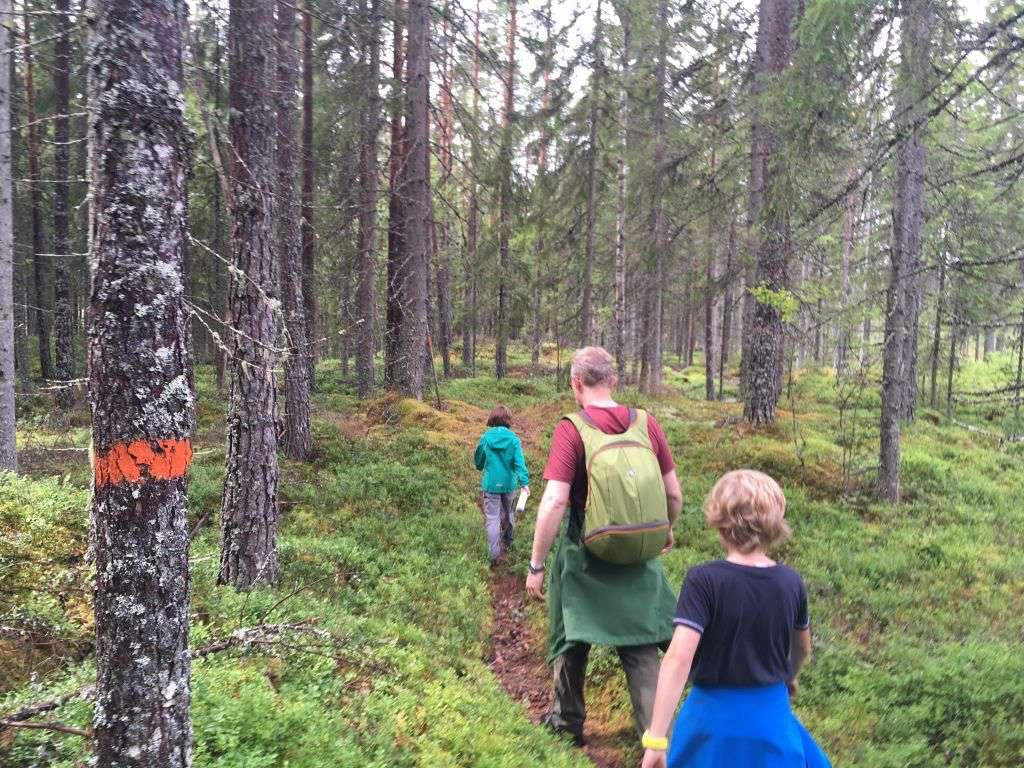 De hike voert over smalle paden en dwars door de Zweedse bossen
