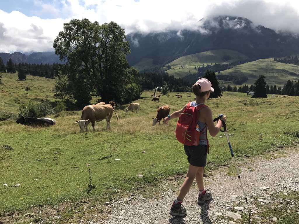 het is prachtig wandelen over de almweiden op de Postalm. We komen onderweg heel wat koeien tegen. in de buurt van de wolfgangsee