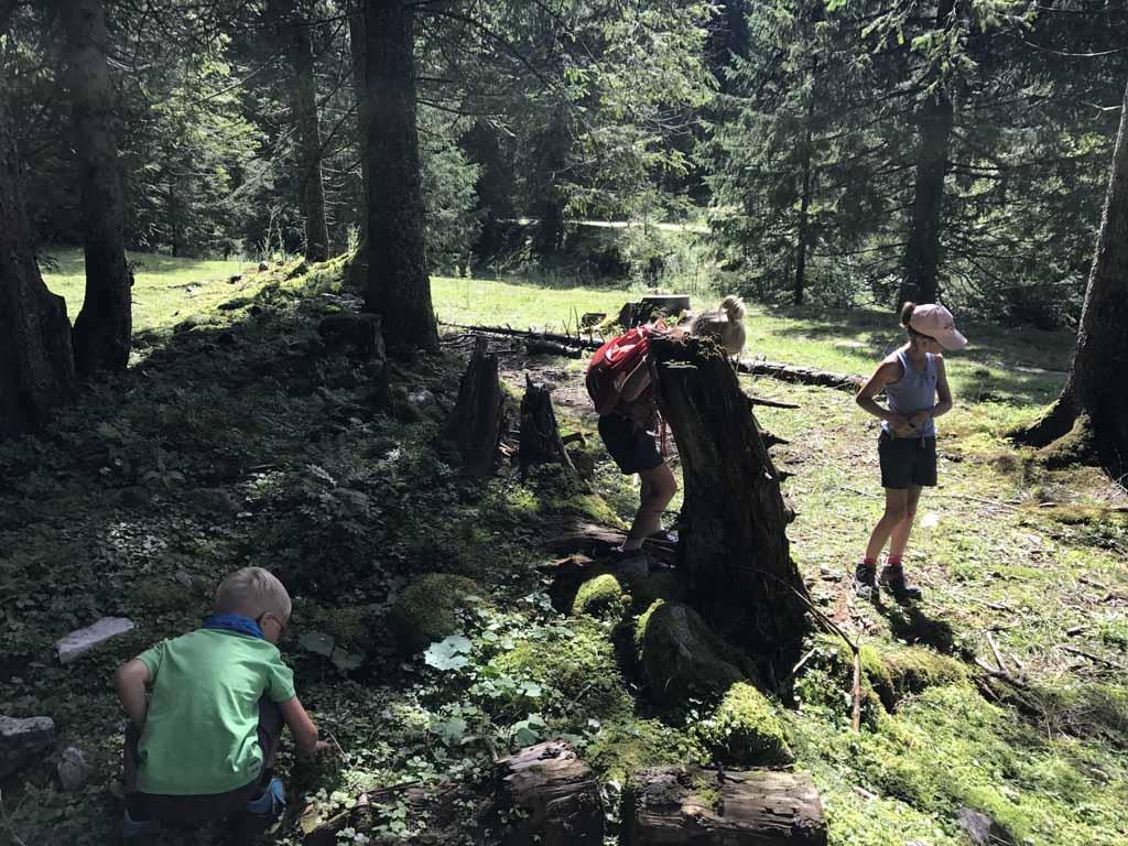 Onderweg stoppen we om bosaardbeien te plukken en natuurlijk ook op te eten. in de buurt van de wolfgangsee