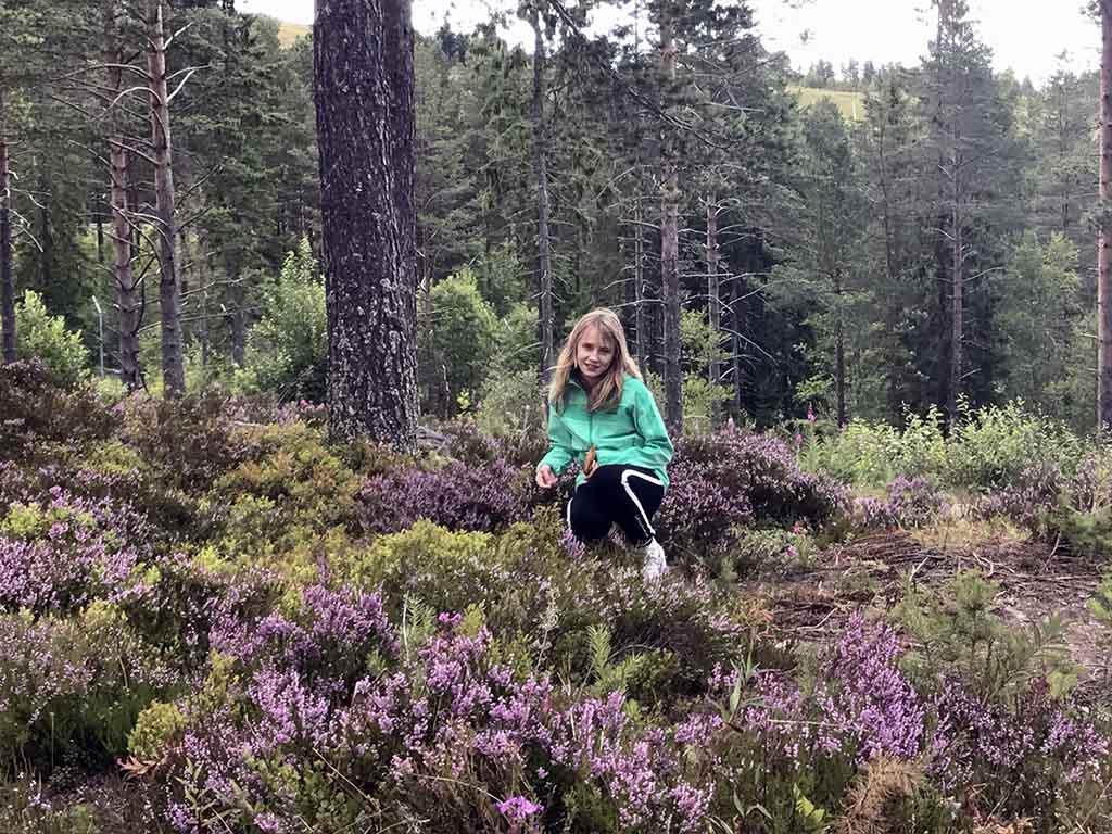 In de bossen bij Orsa Grönklitt kunnen we overal bosbessen plukken.