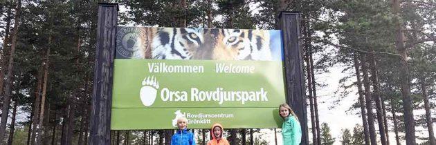 Leren over roofdieren in het Orsa Rovdjurspark