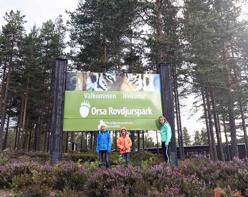 De ingang van het Orsa Rovdjurspark ligt middenin de bossen