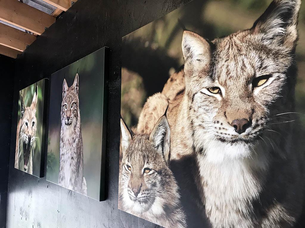 Er hangen overal prachtige foto's van de dieren