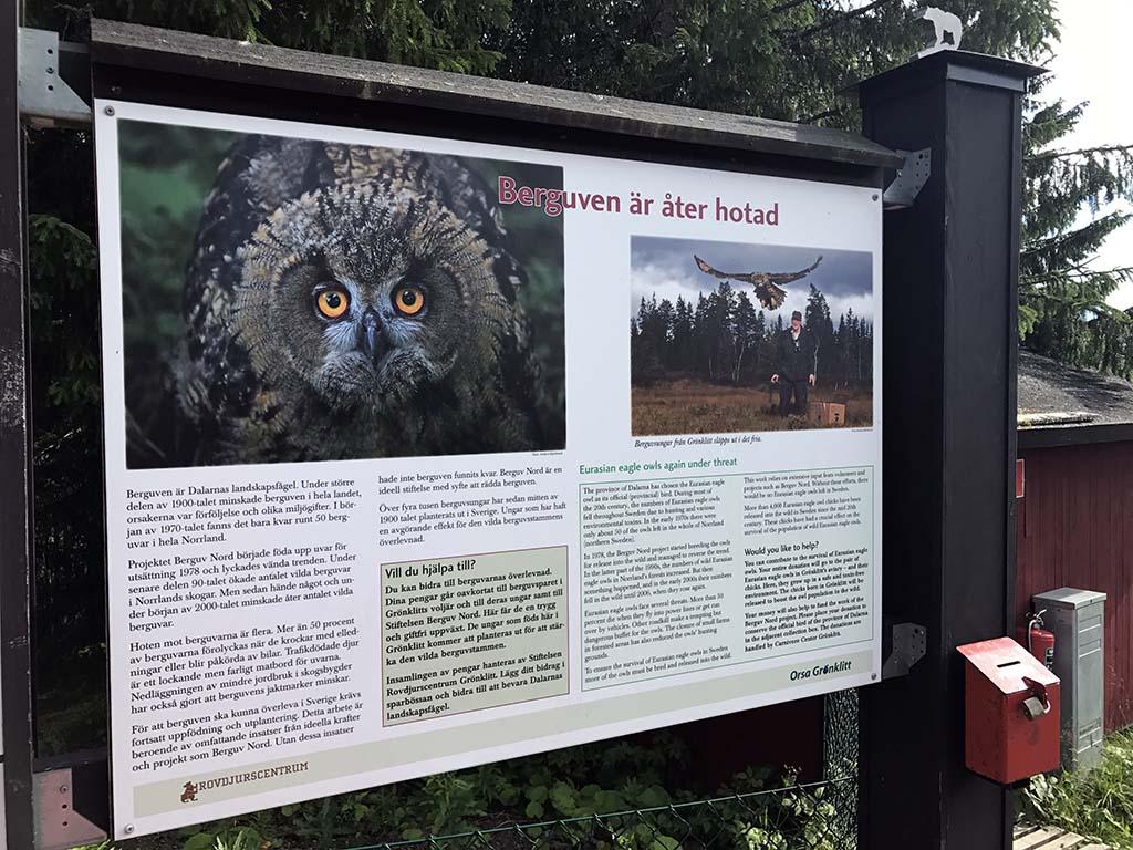 De uilen zitten in het roofdierenpark in samenwerking met een stichting die de dieren beschermt