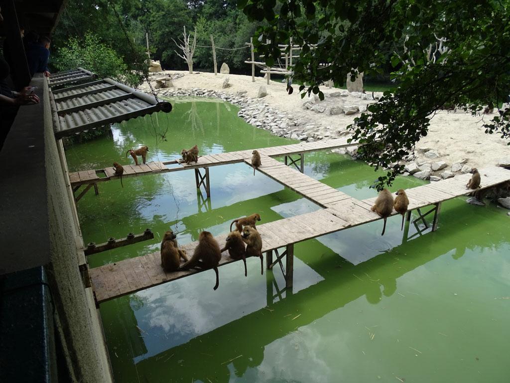 Het apeneiland met heel veel apen.