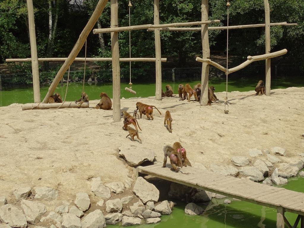 Klimmen en klauteren, de apen hebben genoeg te doen.