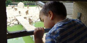 Dierentuin Refuge de l'Arche: een bijzondere dierenopvang in Château-Gontier