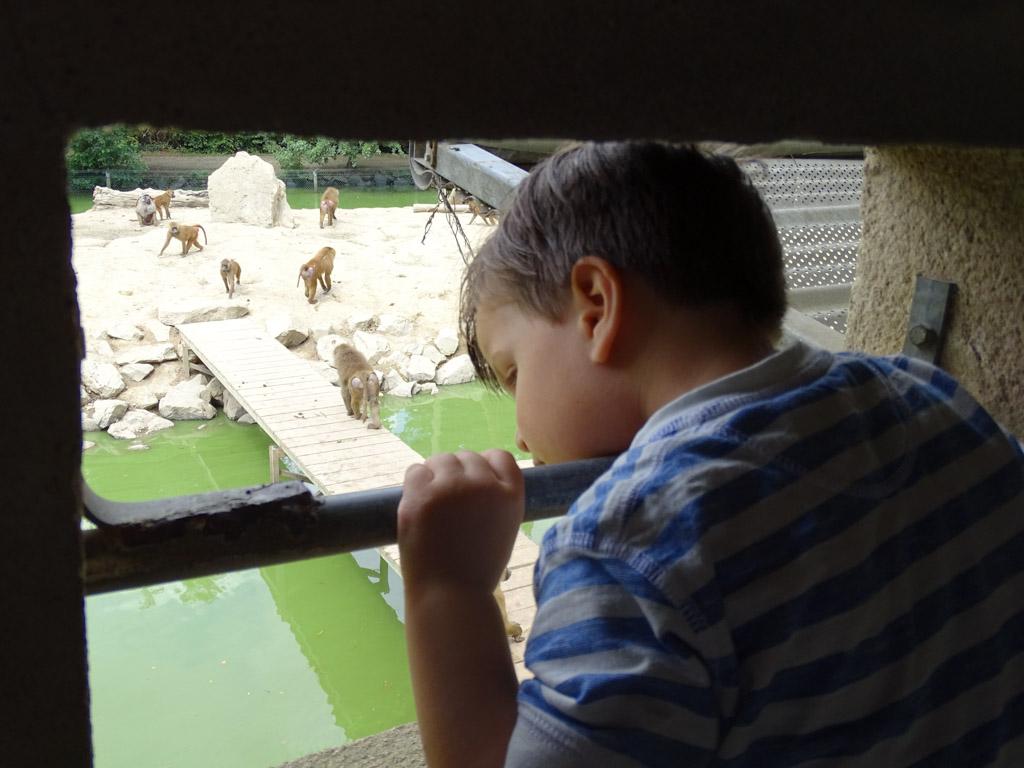Van bovenaf heb je een goed uitzicht op het apenverblijf.