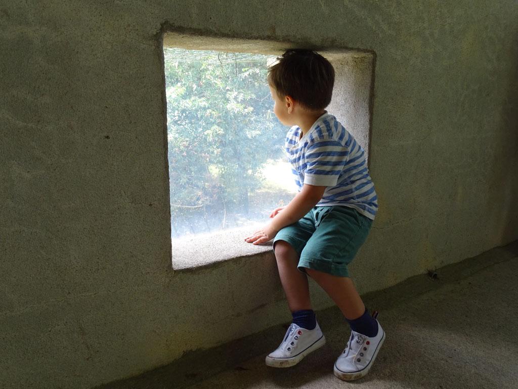 Veilig achter glas de wilde dieren bekijken.