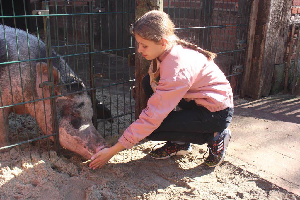 Zelfs de varkens zijn aaibaar.