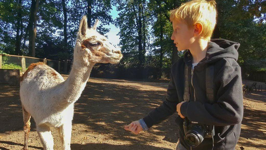 Goed gesprek met een Alpaca.