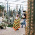 ontdekking cactusoase