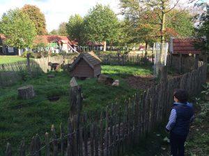 De vakantiepark De Pier zijn ook leuke dieren zoals geiten, kippen en paarden.