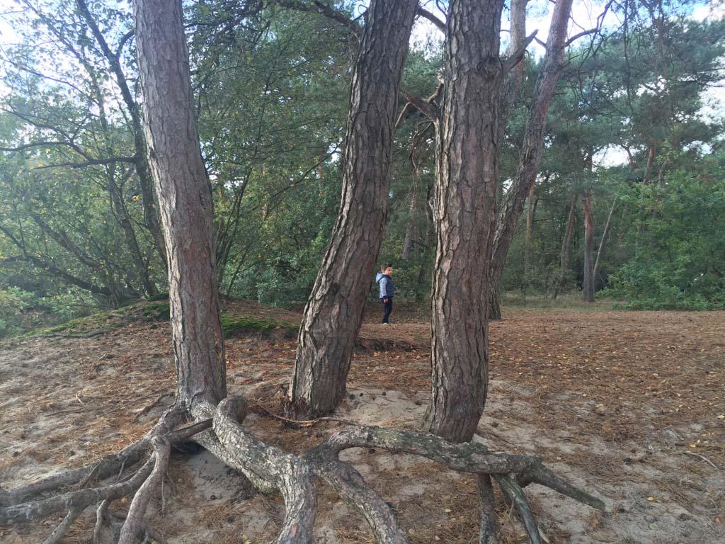 Wat een mooi natuurgebied met stuifzand en genoeg klimbomen.