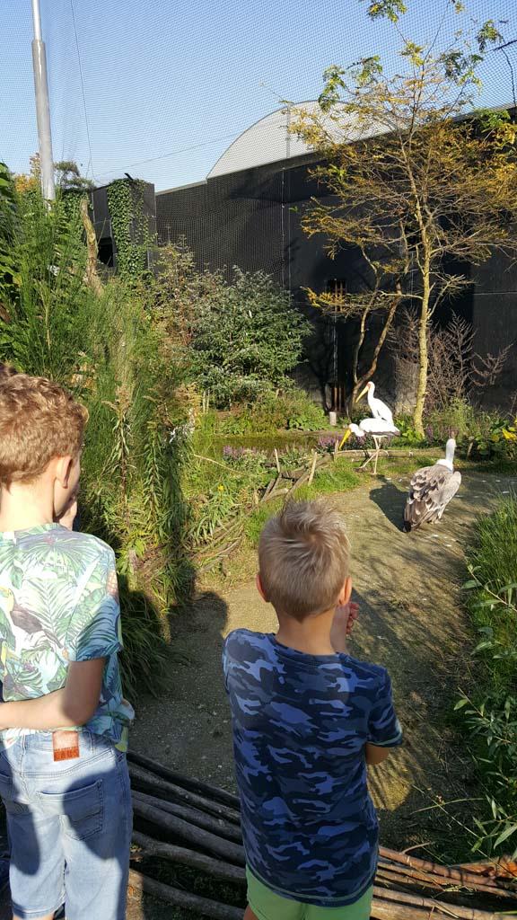Marabu's en vale gieren in de grootste doorloopvolière van Nederland.