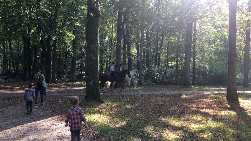 Onderweg komen we paarden tegen.