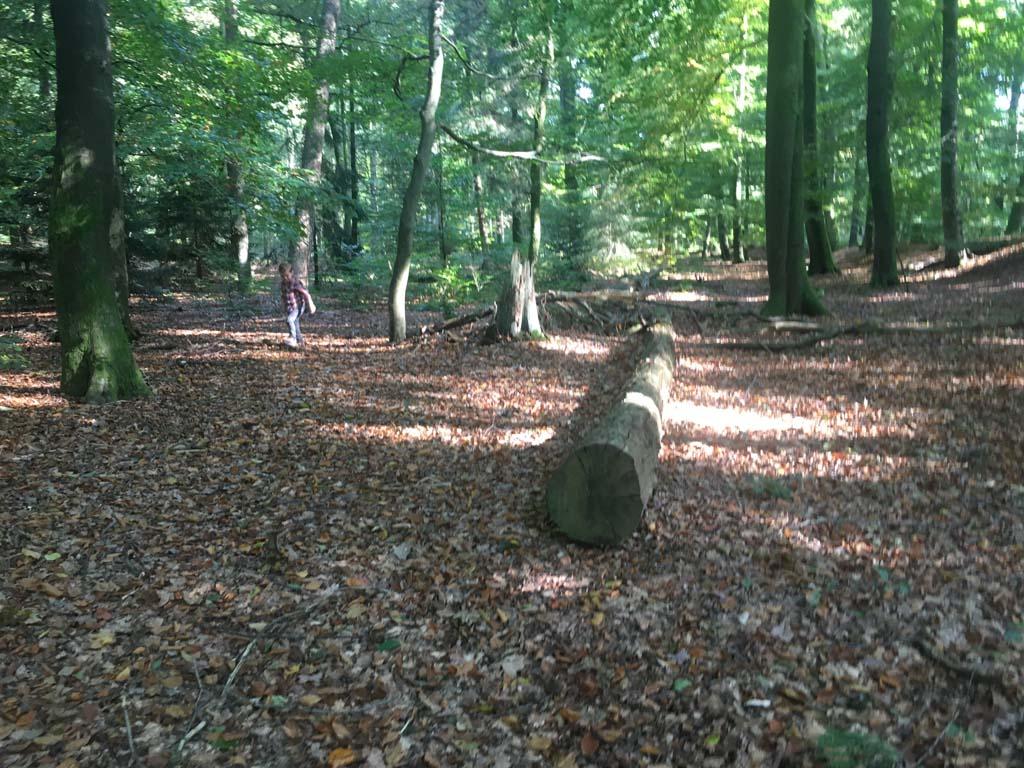 Boys will be boys... Klimmen en spelen op omgevallen bomen in het Paleispark.