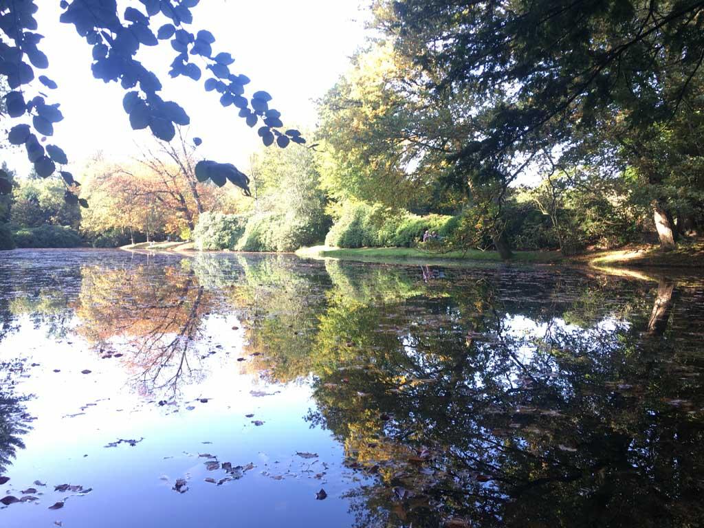Geweldige herfstkleuren in het bos van het Paleispark. Deze plek is overigens alle seizoenen mooi. Tijd voor onze traditionele foto.