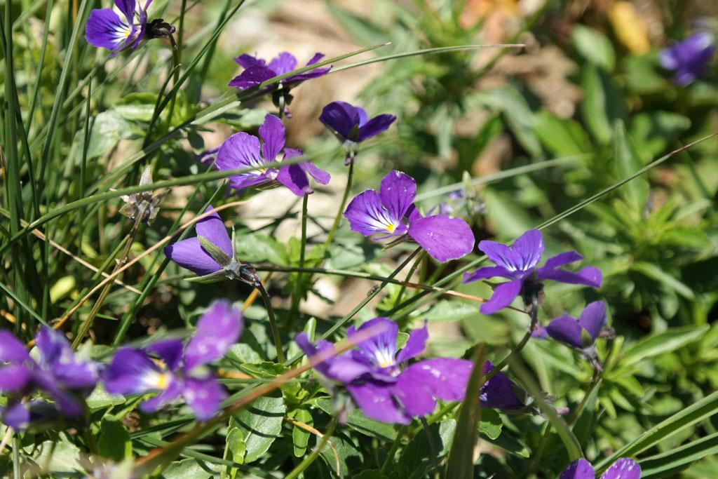 Zoals deze mooie bloeiers.