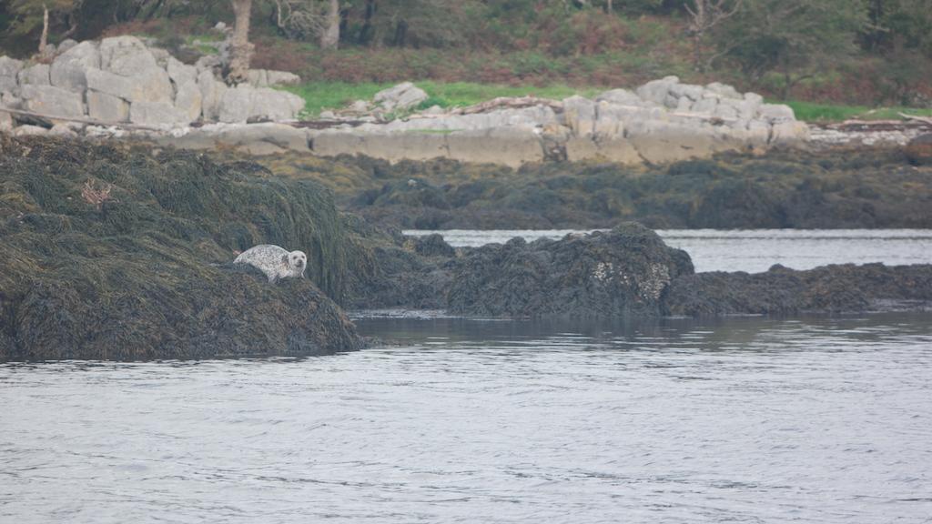 Hoera, een zeehond gespot!