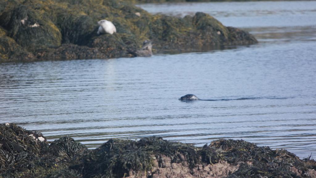 Af en toe zwemt er een zeehond voorbij.