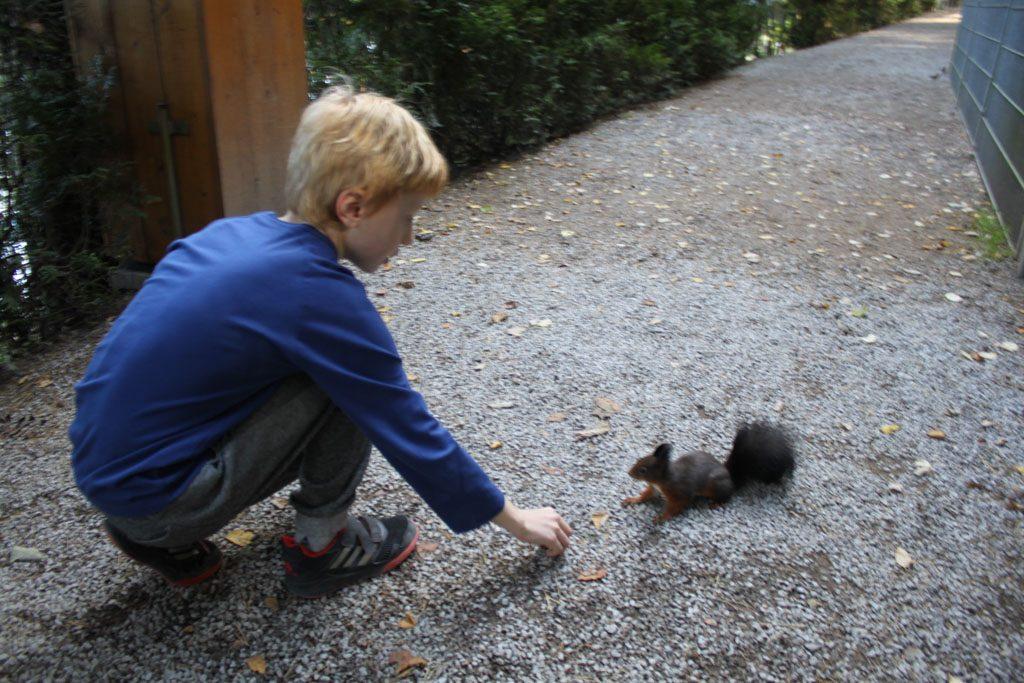 En we voeren de eekhoorns die in het bos bij het park wonen.