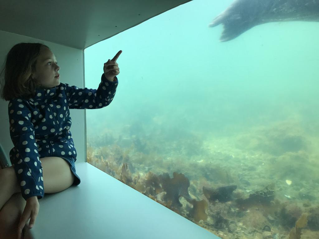 Het bassin van de grotere zeedieren van binnenuit bekijken.