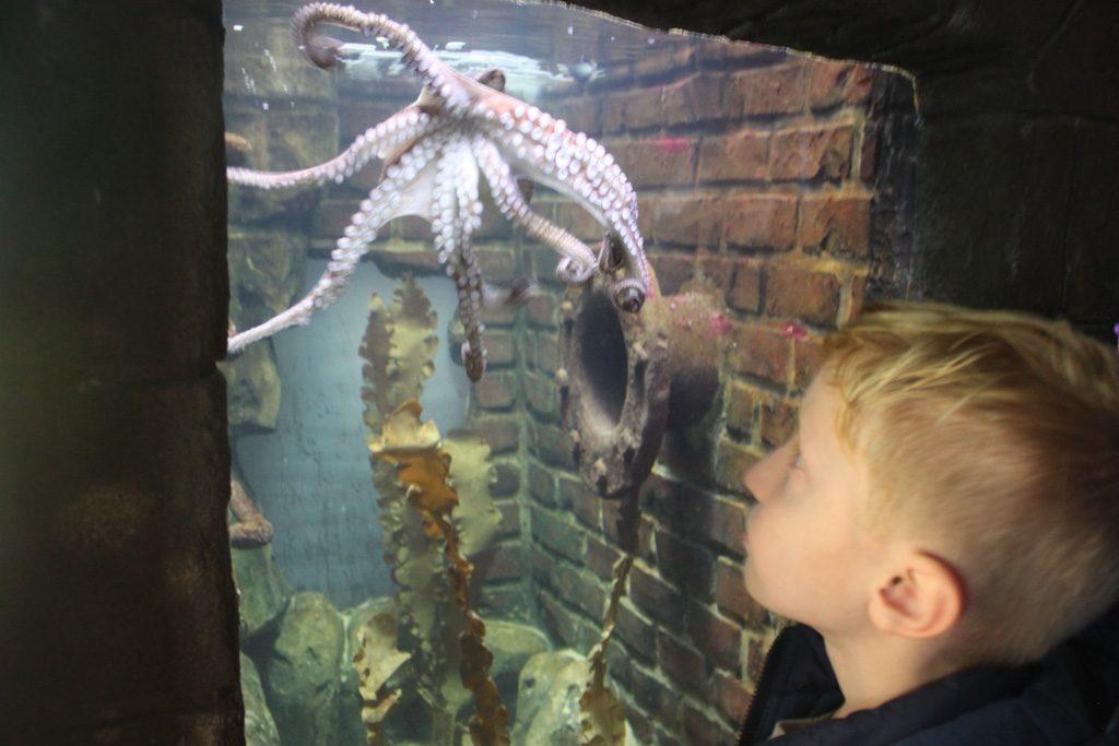 De beroemde octopus van Sealife Oberhausen.