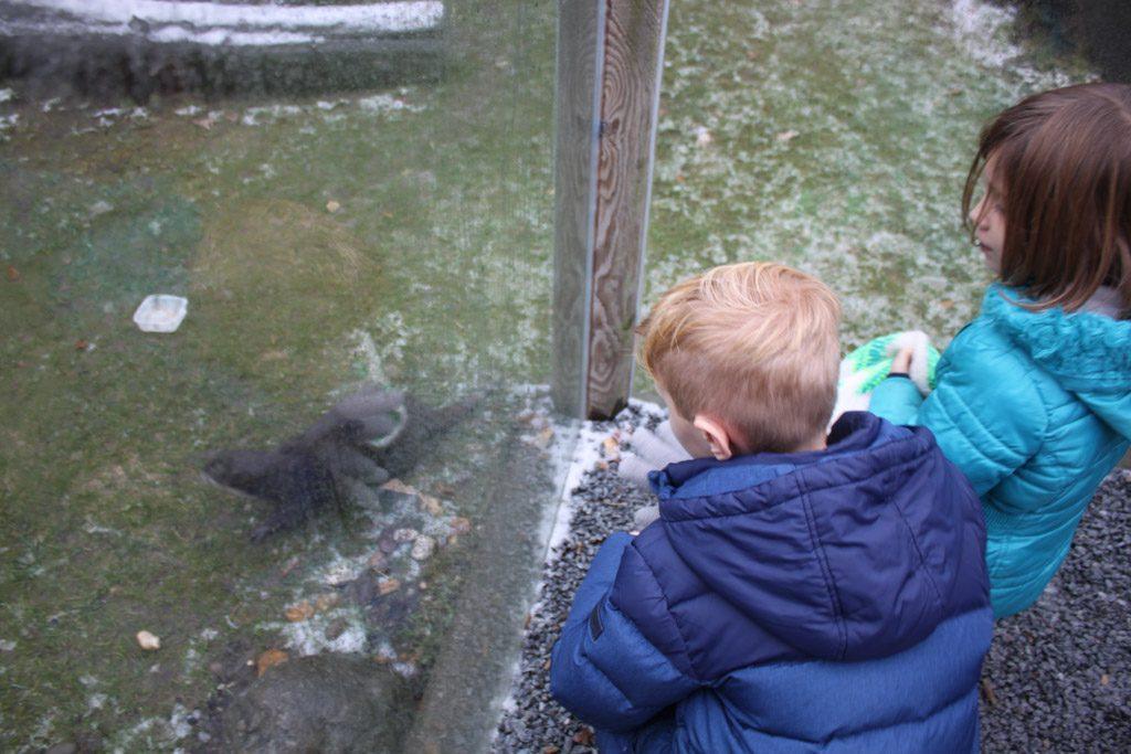 De otters buiten zijn nieuwsgierig.
