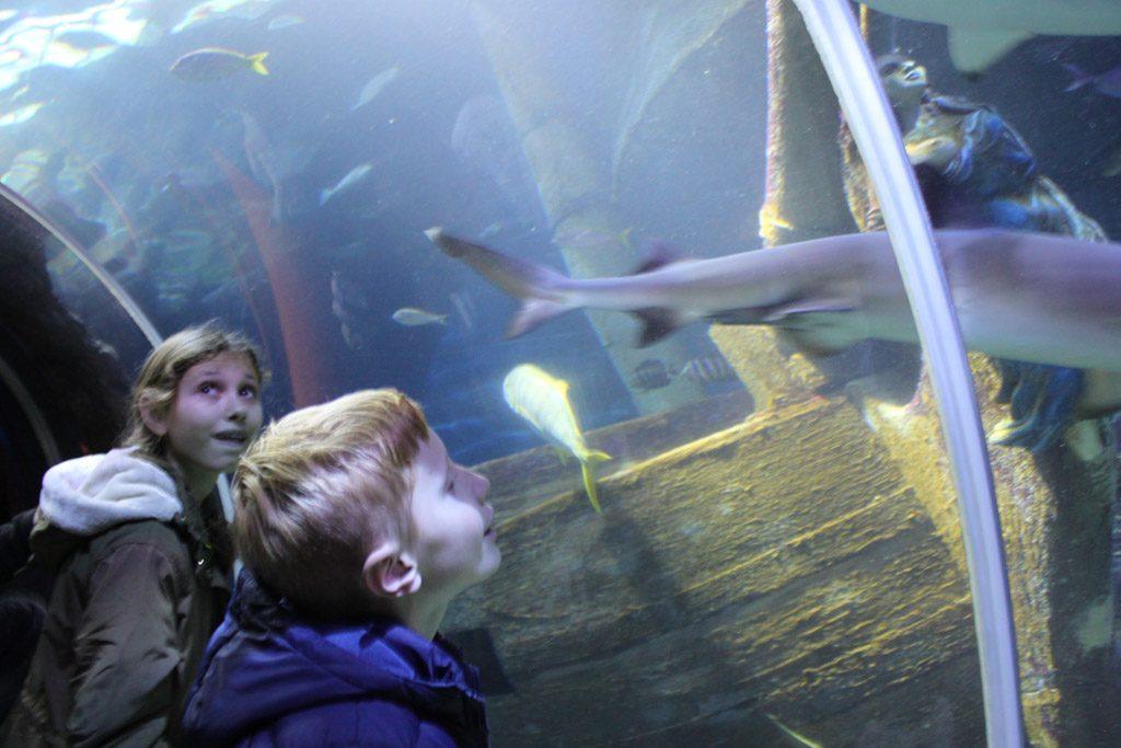 Haaien van heel dichtbij bekijken.