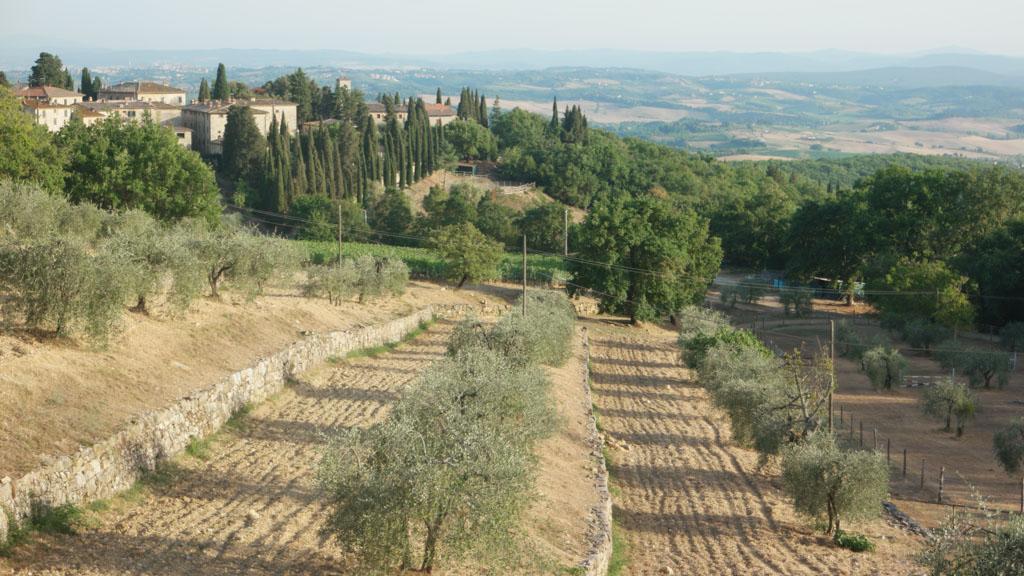 Vooral veel olijfbomen en wijnranken.