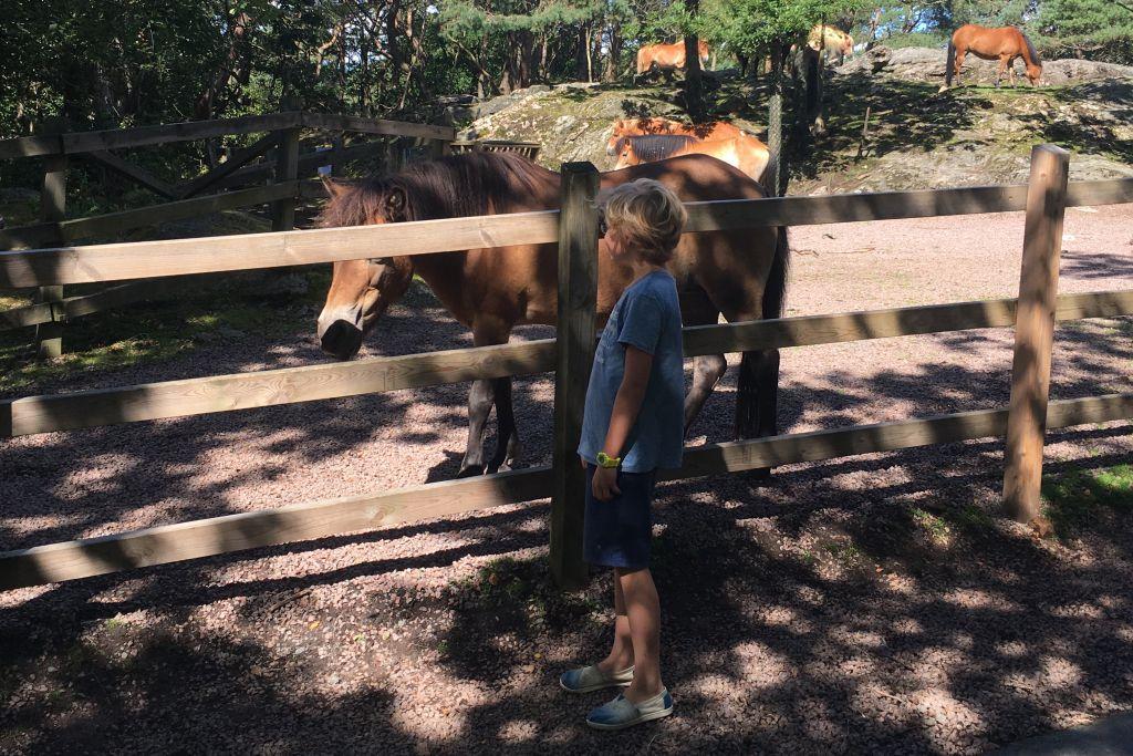 Deze paarden zijn behoorlijk tam
