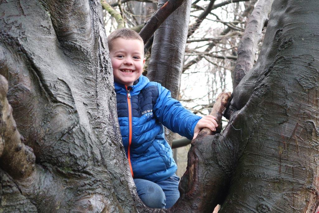 Hoe blij kun je worden van een coole boom?