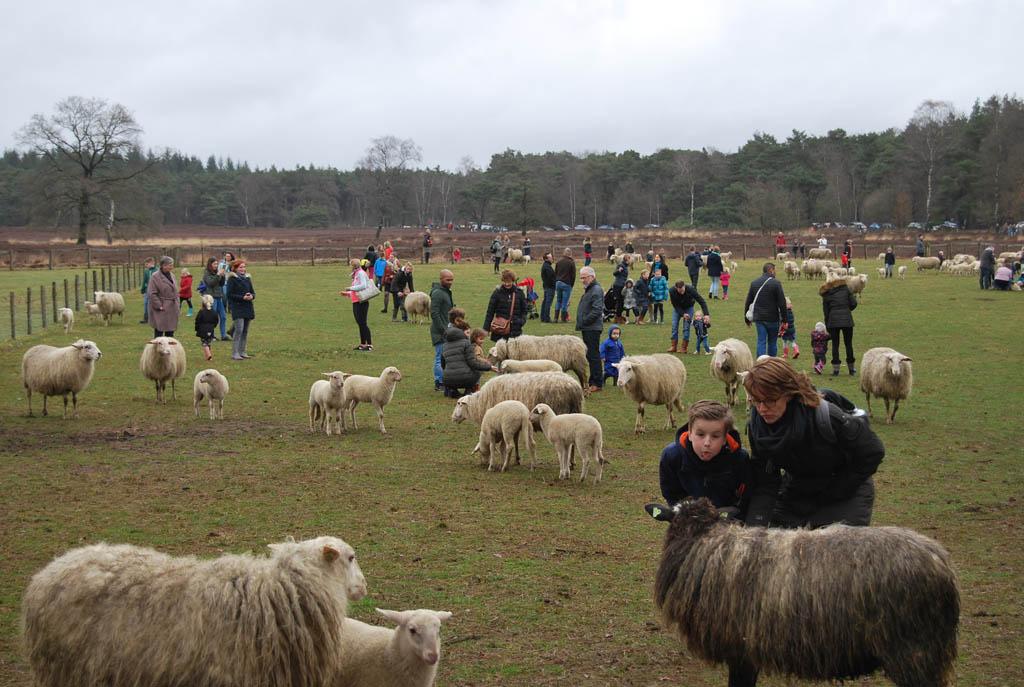 Gezellig druk tijdens de lammetjesdag van schaapskooi Epe-Heerde.