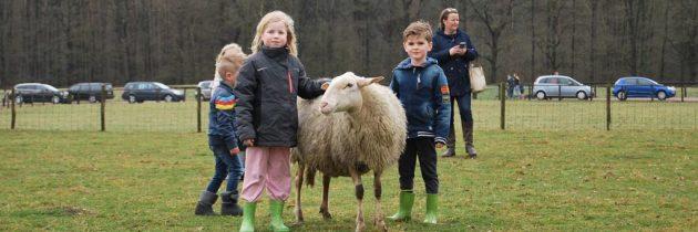 Lammetjes knuffelen op Lammetjesdag van schaapskooi Epe-Heerde