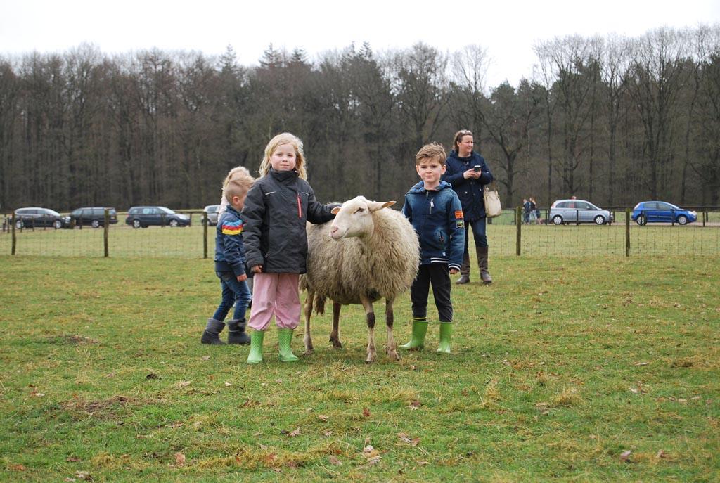 Dit stoere schaap wil best op de foto.