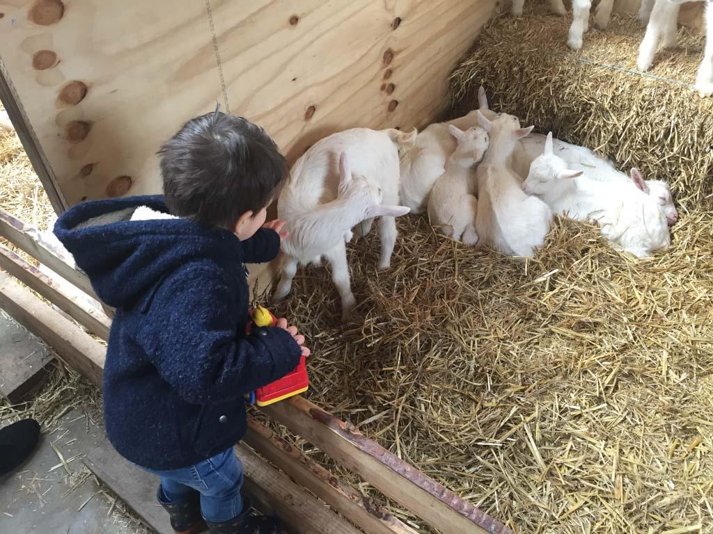 Wat een lieve geitjes allemaal bij de Geertjes Hoeve! (Foto: Yvonne)