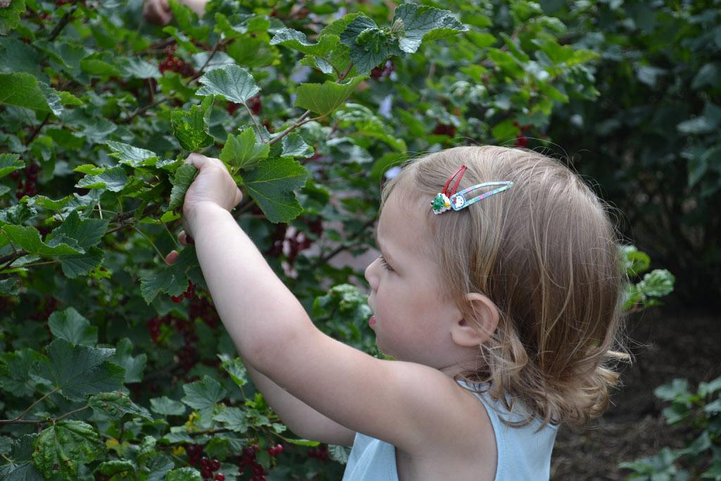 Zelf fruit plukken is niet alleen heel leuk voor je peuter maar ook leerzaam. (Foto: Daphne)