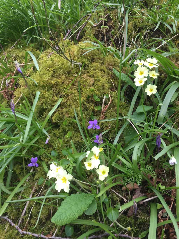 wandelen in Schotland met kinderen bloemen