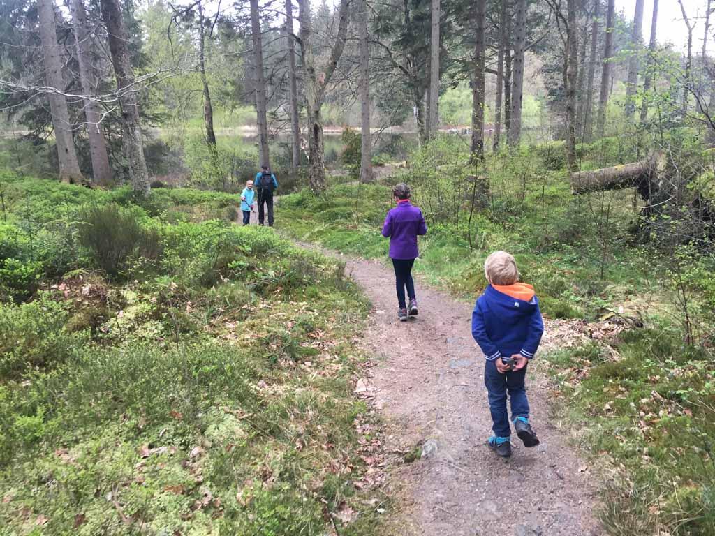 wandelen in Schotland met kinderen bos