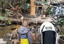Echte flamingo's bij Center Parcs Les Bois Francs