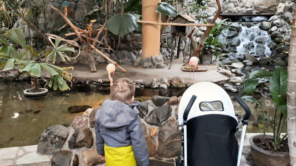 Echte flamingo's bij Center Parcs Les Bois-Francs