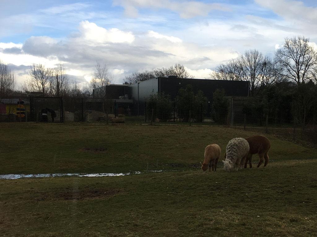 Een dierenparkje is in de winter altijd wat mistroostig.