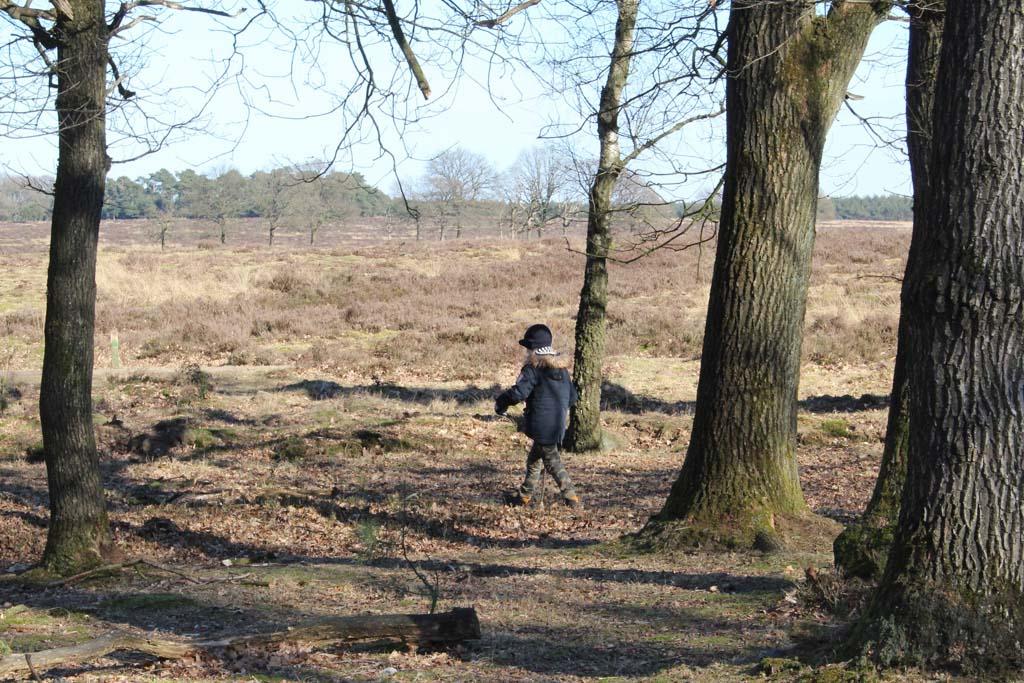 In het Deelerwoud vinden we een mix van bos en heide.